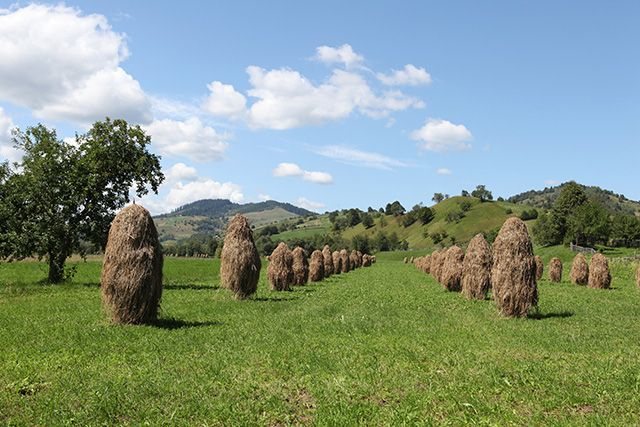 Maramures, Roumanie. http://www.lonelyplanet.fr/article/10-experiences-vivre-en-roumanie #maramures #Roumanie #campagne #voyage