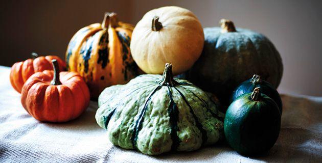 •Kaum ein anderes Gemüse ist so mit dem Herbst verbunden, wie der Kürbis. Aber nicht jeder Kürbis ist essbar. In unserem Artikel, erfahrt ihr mehr.