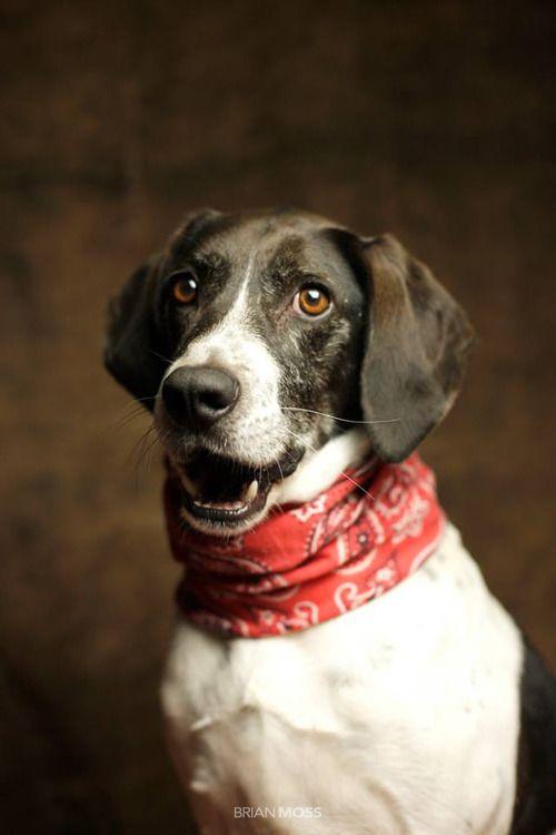 Brian Moss - Il réalise de magnifiques portraits photo de chiens abandonnés pour les aider à trouver un foyer ❤❤❤ Du Grand Art - Des Artistes Talentueux .......... et du coeur ❤❤❤