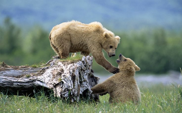 Image from http://img.phombo.com/img1/photocombo/15004/beautiful_Animals_HQ_wallpapers_---bipin369----1.jpg_Animals_bipin369_34.jpg.