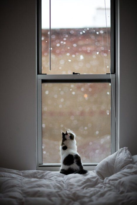 kitty watching the snow fall