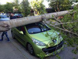 puu auton päälle