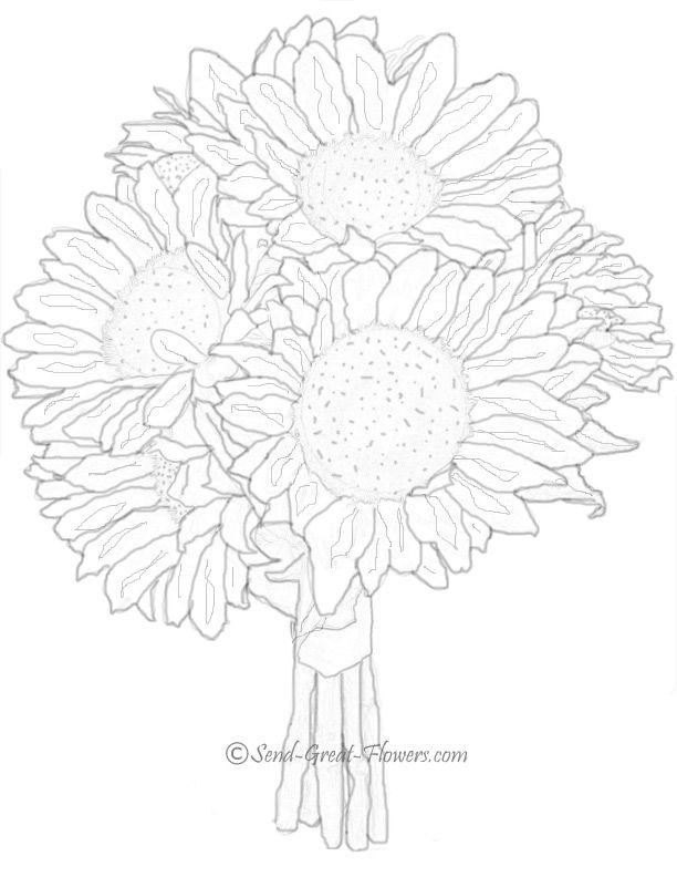 coloring pages of realistic sunflowers | 204 best SLUNEČNICE - Sunflower images on Pinterest ...