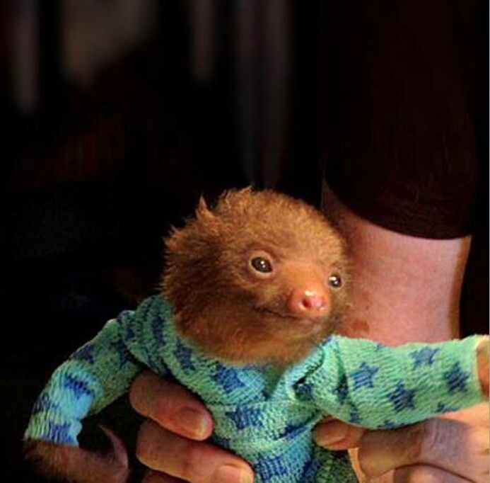 Baby sloth wearing pajamas                                                                                                                                                      More