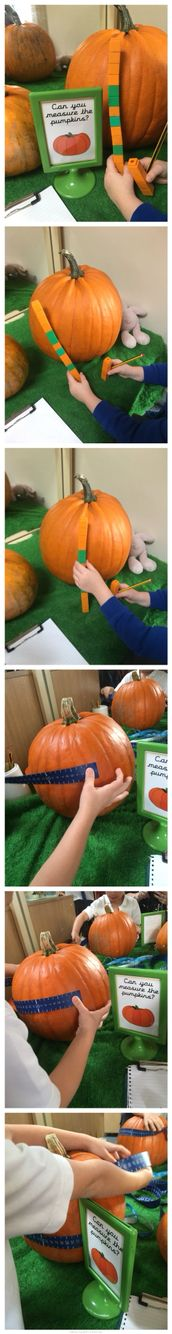 Pumpkin measuring using non-standard and standard measuring units