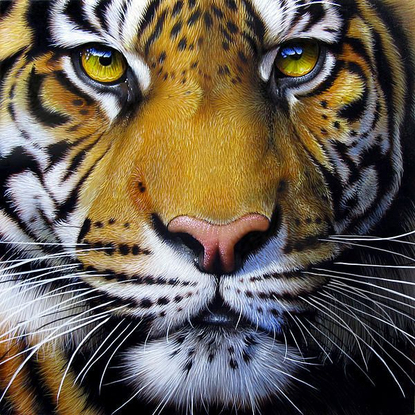 Tiger - painting by Jurek Zamoyski.