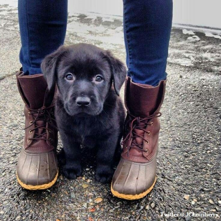 What's cuter; the boots or the dog?