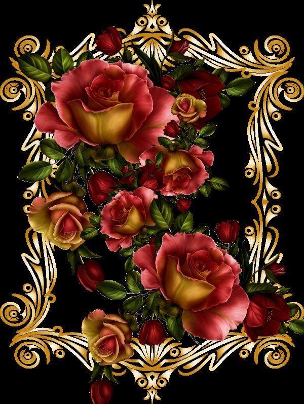Awesome rose display!!
