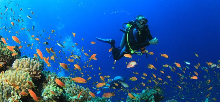 The best way to see the underwater world is to become a fish. http://amigosdelmar.com/about-amigos-del-mar/