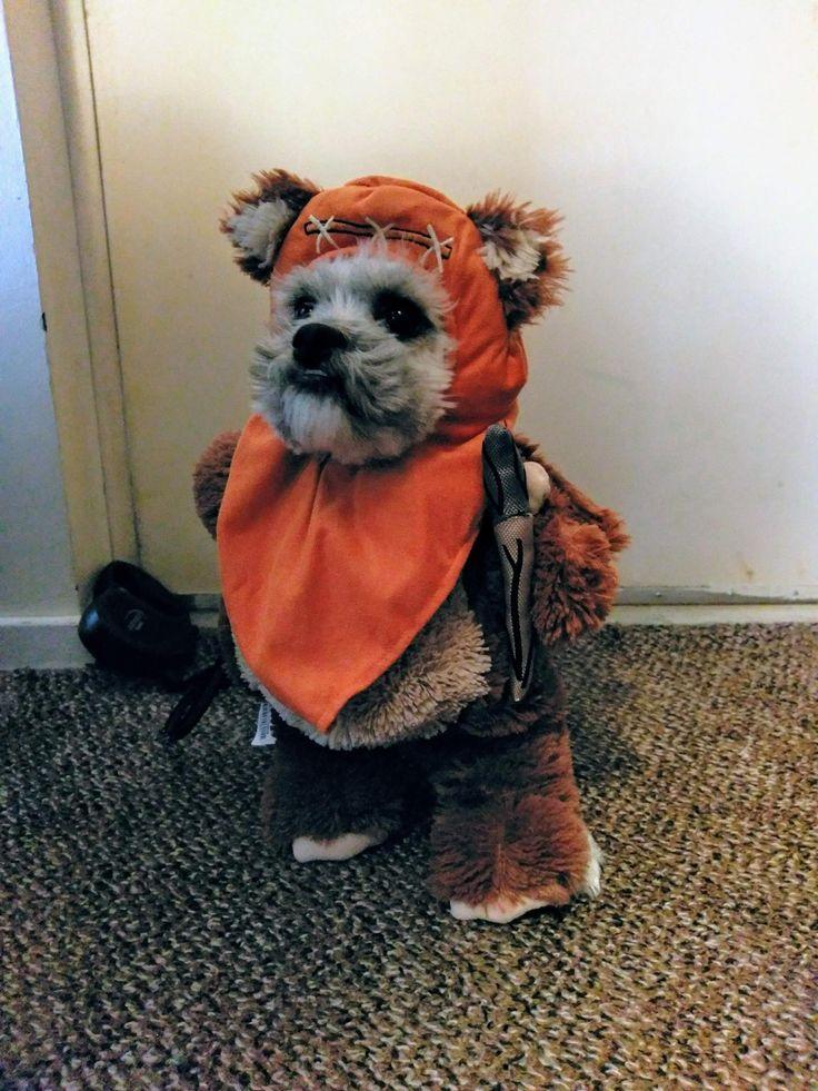 Best 25+ Ewok dog costume ideas on Pinterest   Small dog ...