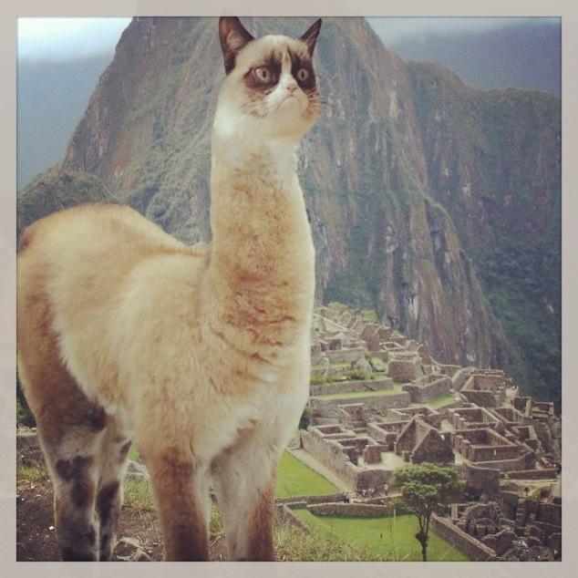 Perfect Grumpy Cat Llama Grumpy Cat Love Grumpy Cat