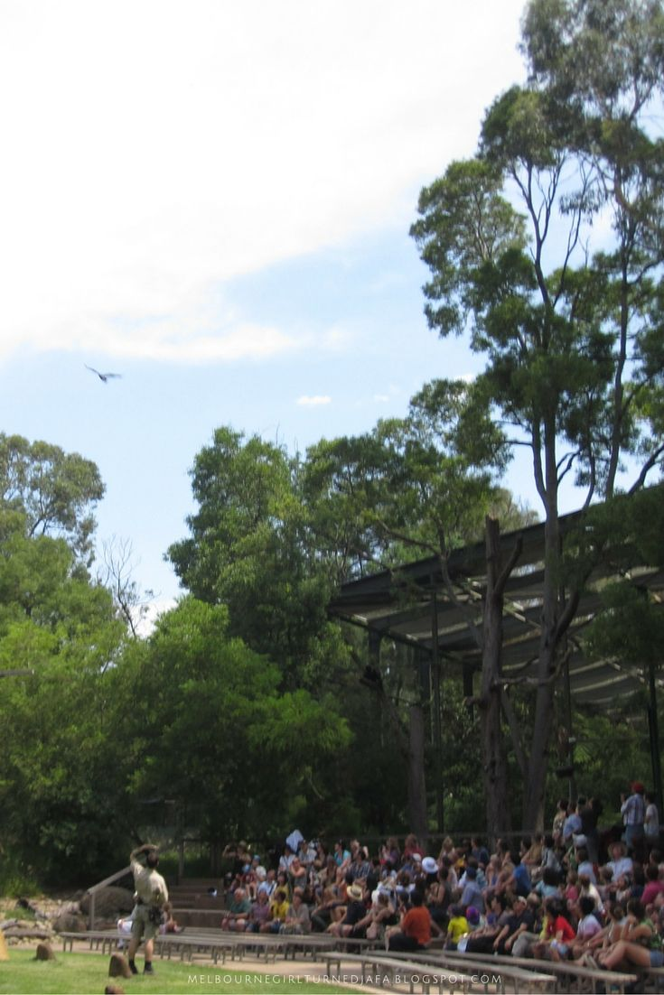 Spirts of the Sky at Healesville Sanctuary. One of the many things you can do with kids in Melbourne. Get other ideas now.