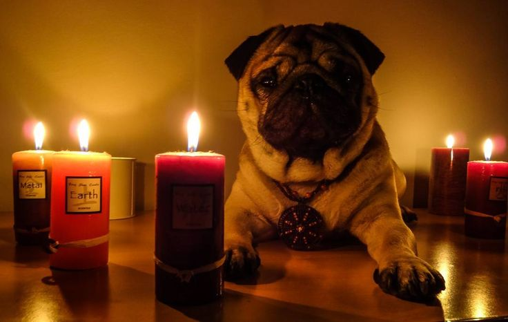This is not witchcraft  It's me supporting #ChangeClimateChange  Let's celebrate together #EarthHour ! See you after 9:30 PM    #mauricethepug #EarthHour #EarthHour2017 #changeclimatechange #earth #togetherpossible #ClimateAction #pug #mops #dog #puppy
