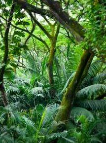 Beauty of the tropical rainforest