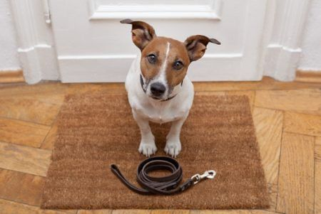 Babá de planta e pet sitters: novos serviços para as suas férias