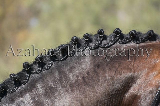 Scalloped braids on PRE horse