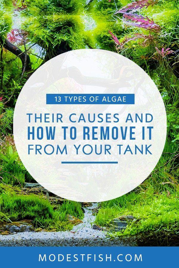 13 Types Of Aquarium Algae Causes How To Get Rid Fresh Water Fish Tank Fish Tank Saltwater Aquarium Fish