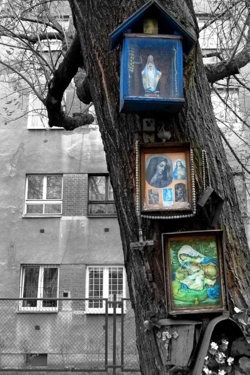 Shrines on a tree trunk.