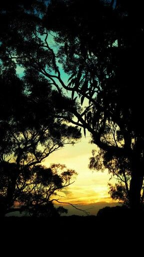 Sunset Berowra Heights
