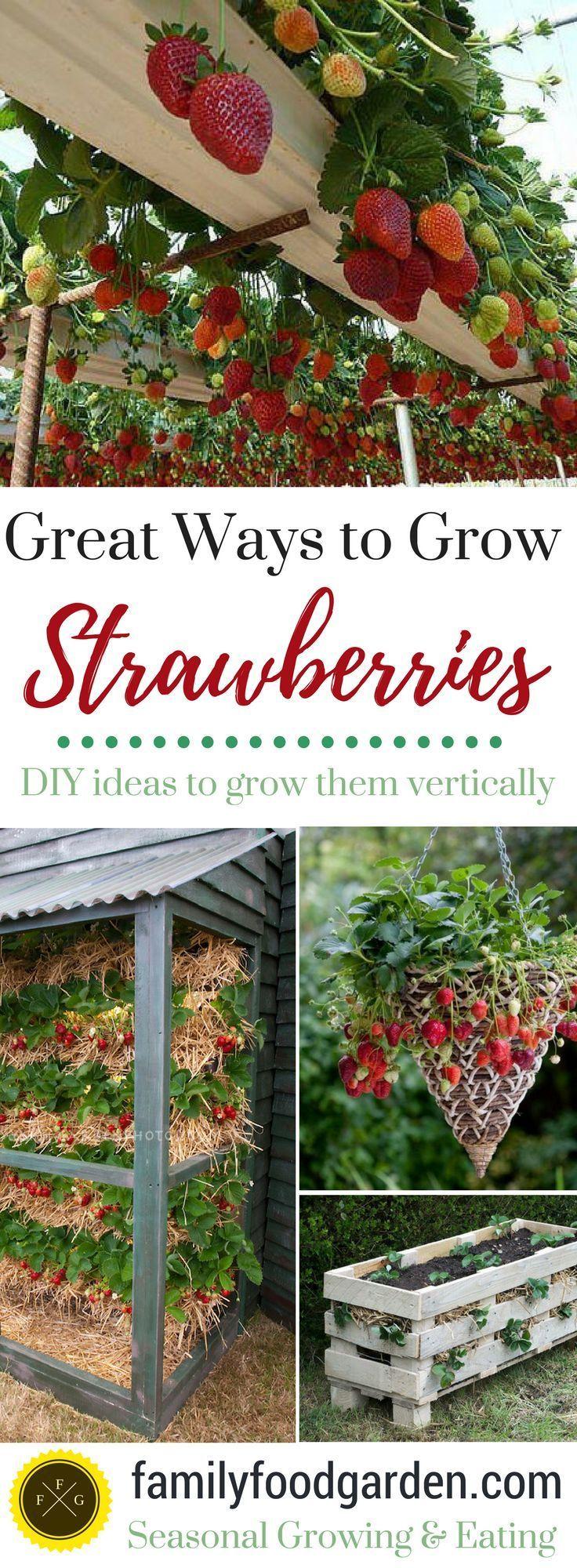 Erdbeeren wachsen vertikal, in Behältern, in Rinnen und mehr! Einfach DIY!