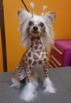They said I could be anything when I grew up so I became a giraffe.