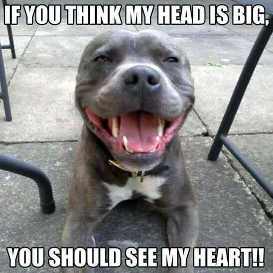 So true! #Staffy smile