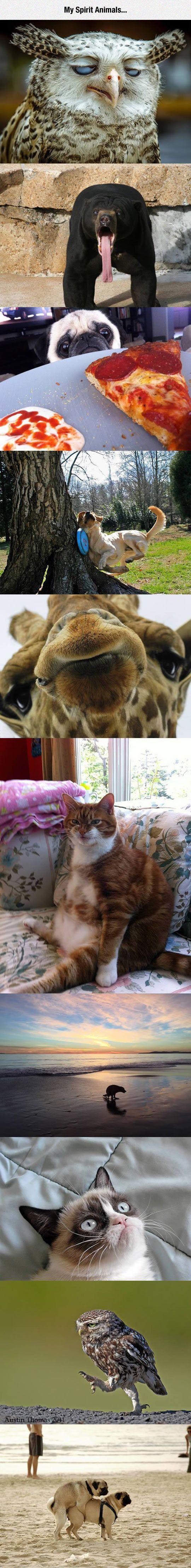 Das sind meine Gespenstertiere – Nur um es zu sagen ….. – #Die # Meister #mein #Sin …   – Animal Memes