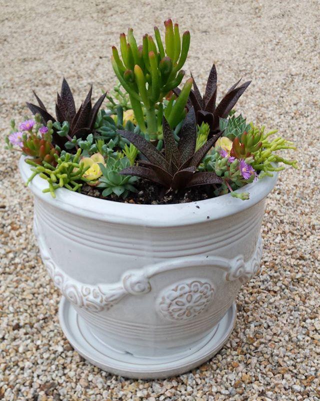#sanfranciscobay #succulents#seasideca#sandcityca#salinascalifornia#carmelmission#pebblebeach#watsonville#carmelbythesea#carmelvillage#carmel#hwy1exit403 #715tiogaavesandcityca#zaratesoutdoorlivingartanddesign#pot#uniquepots#localbusiness #gardening#garden#outdoors#siliconvalley #montereybay#cachagua #hollisterca #pacificgroveca #design #sanjoseca #hollisterlocals #montereylocals - posted by Mesoamerican Artist Jj parra https://www.instagram.com/jjparra35 -  See more of Hollister, CA at…