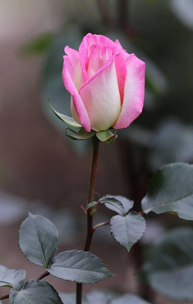 Фотографии с красивыми цветами никого