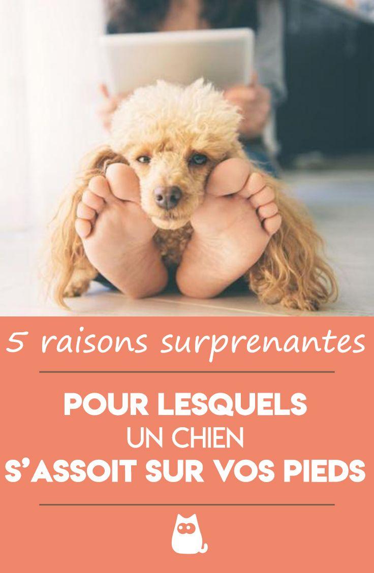 Mon Chat Dort Sur Mes Pieds pourquoi mon chien s'assoit sur mes pieds ? | langage
