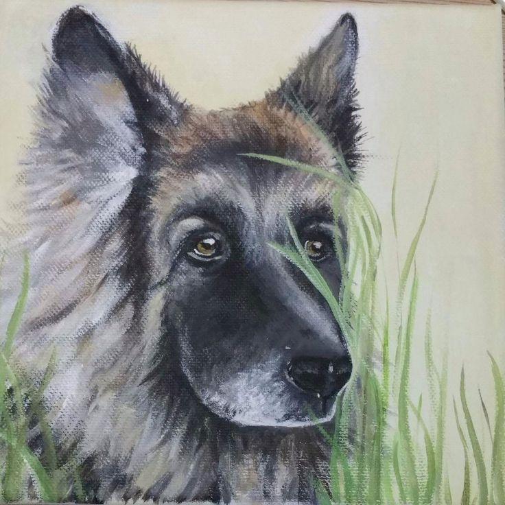 German shepherd 20x20cm acrylic on canvas