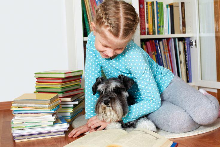 Puppy board and train programs