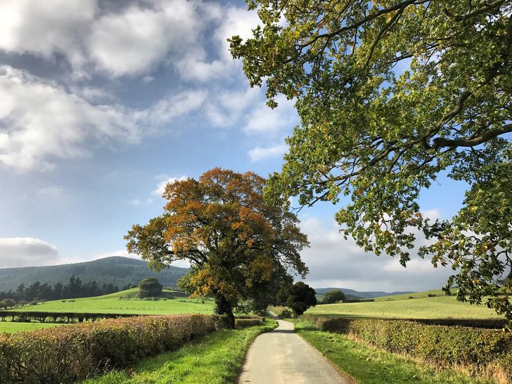 An autumn walk up the lane in South Shropshire. The walk takes you along a quiet lane from Hopton House to Hopton Castle. #englishcountryside #autumn #tree