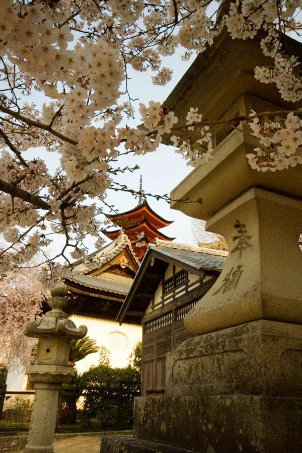 cerisier japonais, cerisiers et temples à Hiroshima