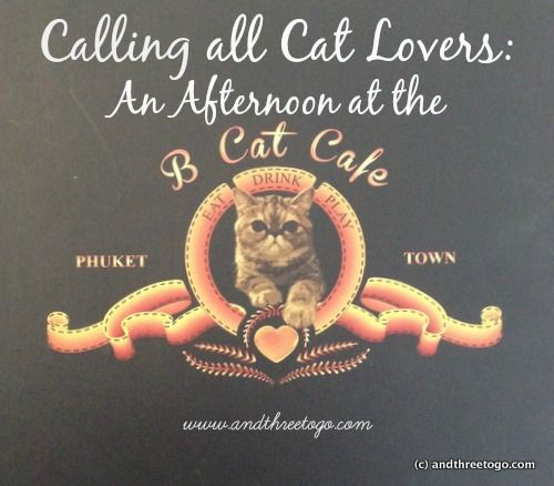Calling all Cat Lovers: An afternoon at the B Cat Cafe in Phuket Thailand