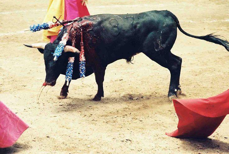 Ban bullfighting in Spain!!!
