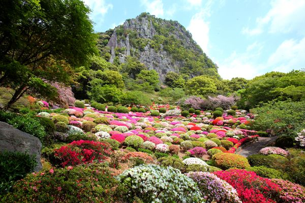 This Japanese circuit style garden is in Saga, Kyushu, and was built in 1845. You can enjoy 200,000 azalea, 5,000 cherry blossom trees, and 170 year old Japanese wisteria.