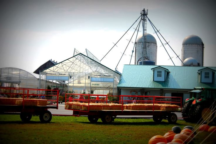 Review of Gallrein Farms - Shelbyville Great for fall pumpkin picking