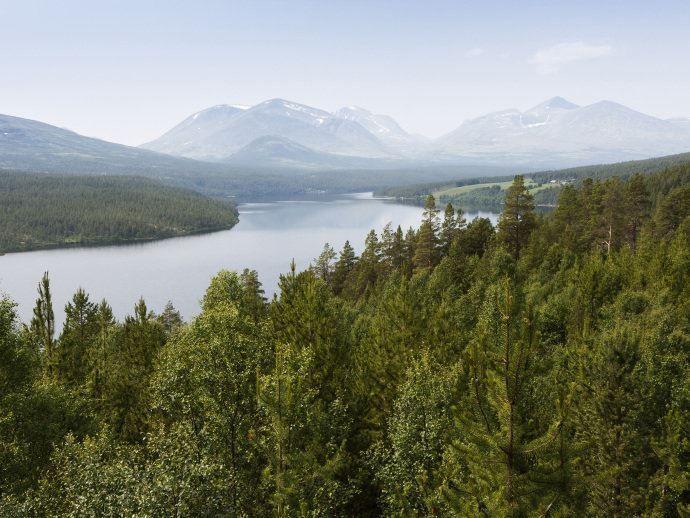 Noruega es el primer país del mundo en prohibir la tala de árboles - Ecocosas