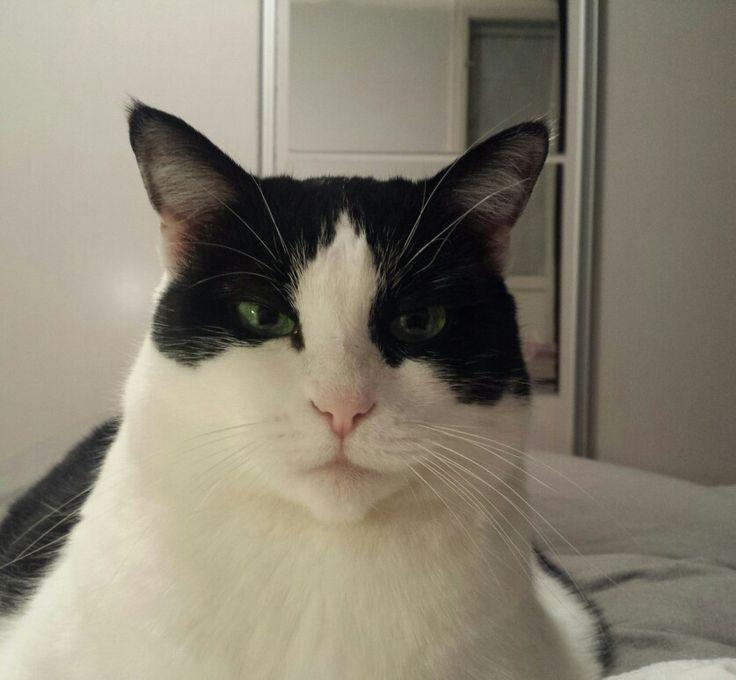 Grumpycat Dolfy
