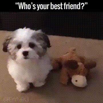 Who's your best friend?