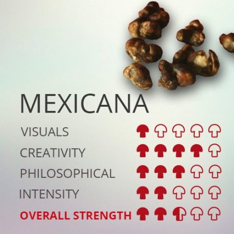 Trufas mágicas psilocybe Mexicana