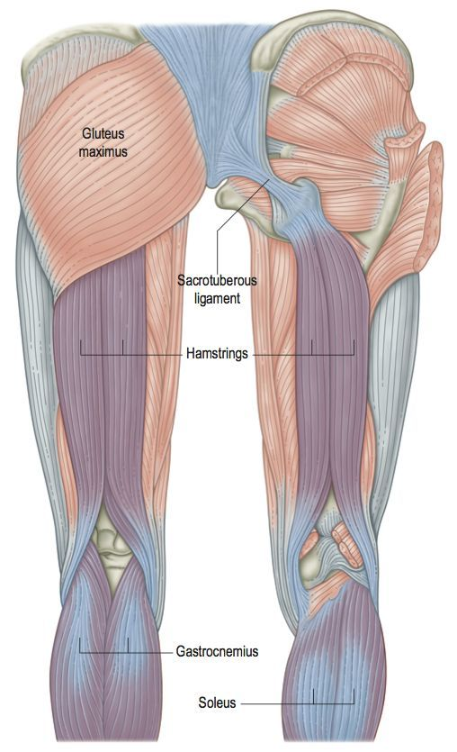 When we are working in the myofascia, we are often looking for muscular events – trigger points, hypertonicity, hypotonicity, and 'knots' in general. When we focus particularly on the fascial structure, our appreciation must shift toward the fascial fabric itself, instead of the fascial fabric spun more loosely within the muscle.