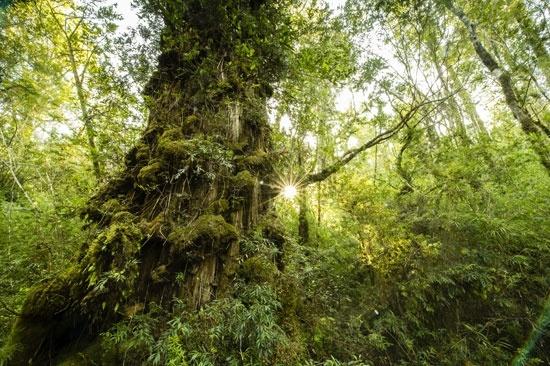 Otoño, la mejor época para ver copihues en la selva valdiviana: La costa al sur de Valdivia es un destino prácticamente ignorado por el turismo nacional, pero que ofrece una experiencia única: sumergirse en el bosque nativo, sentir la lluvia sobre la piel y admirar los copihues en su mejor momento. Foto: Nick Hall