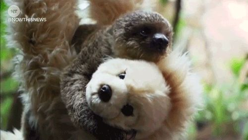 New trending GIF on Giphy. london now this news nowthisnews sloth teddy cute animal baby sloth. Follow Me CooliPhone6Case on Twitter Facebook Google Instagram LinkedIn Blogger Tumblr Youtube