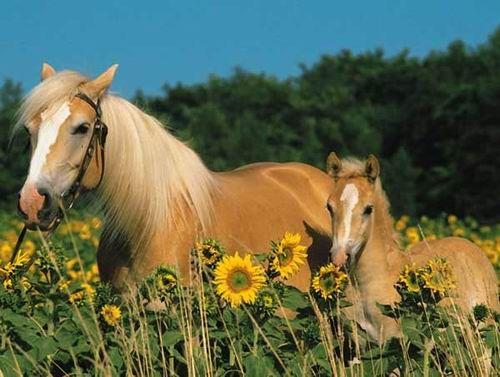 lovak:D: augusztus 2012