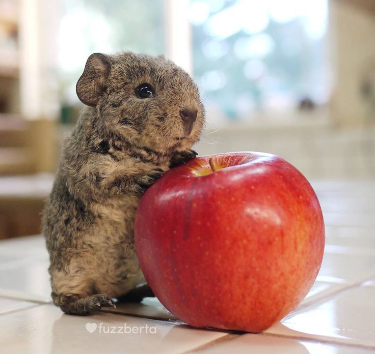 """So you're telling me that when I grow up Imma eat this WHOLE apple?"" Jelly Baby kinda has a skeptical-meme-face"