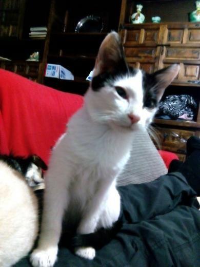 Gato En AdopcióN - Gatos en Madrid, Collado Villalba.