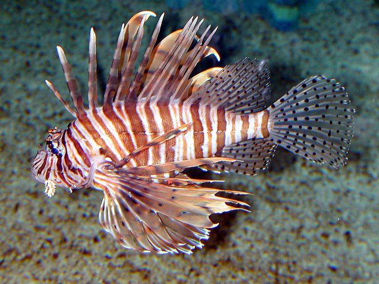 Caribbean Sea Creatures: 19 Best Images About Amazing Creatures On Pinterest