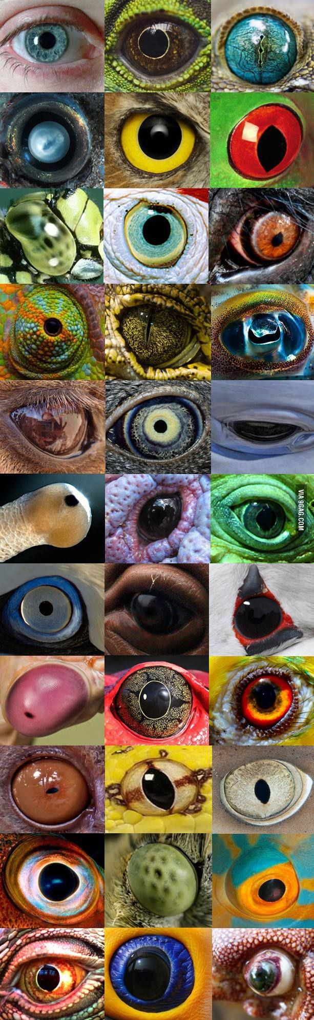 Nature is watching you!